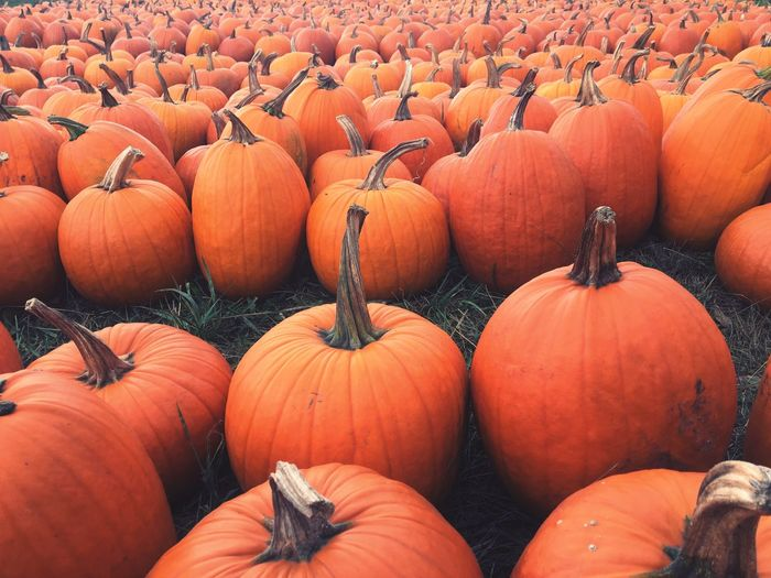 High angle view of pumpkins for sale