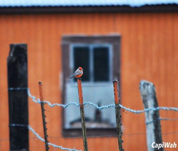 de esas veces CapiWah Birds Bird Photography Photography
