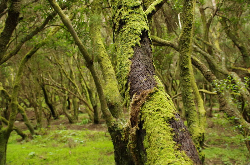 Moss on a trunk Beauty In Nature Close-up Forest Green Color Growth Landscape Nature No People Outdoors Tranquil Scene Tranquility Tree Tree Trunk