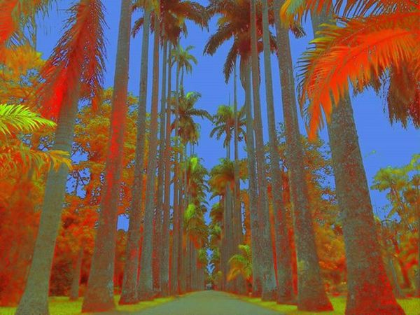 Colors Riodejaneiro Jardimbotanicorj Asuszenfone5 Nature Cores