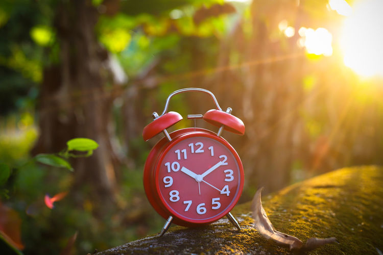 Red Alarm Clock Red Alarm Clock Clock Hand Clock Clockworks Alarm Clock Time Number Nature Tree No People Focus On Foreground Clock Face Accuracy Close-up Communication Red Plant Plant Part Day Leaf Outdoors Sunlight Minute Hand