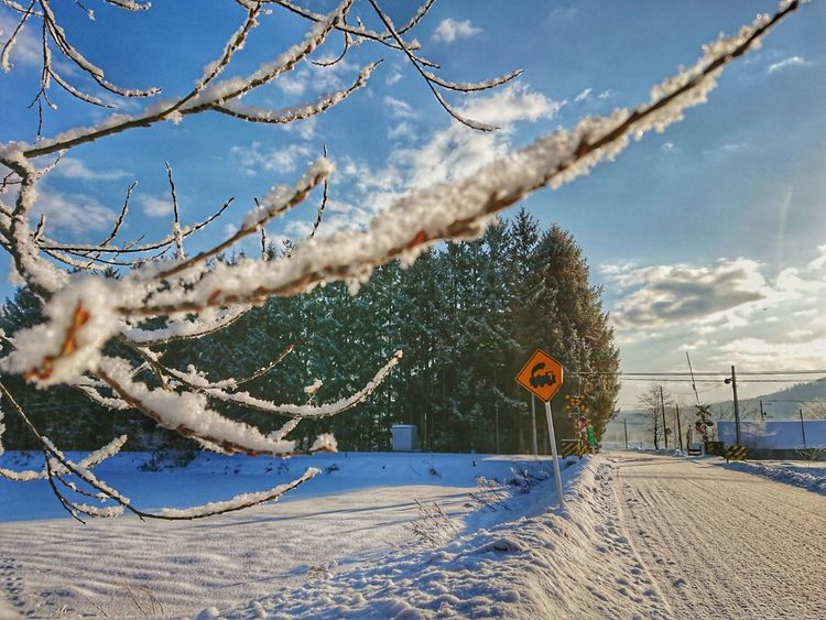町のそのへん。 Landscape Black_chica1801 Landscape_photography 田舎暮らし Agriculture Chica's Photo Trees Snow Winter Chica's Winter Winterlandscape Winter Wonderland Beach Sky Outdoors Day Sand Nature Cloud - Sky Beauty In Nature No People Tree