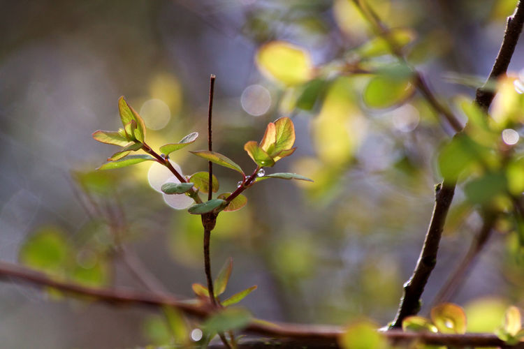 Plant Growth No People Beauty In Nature Nature Close-up Day Plant Part Leaf Twig Branch Fragility Green Color Beginnings Plant Stem Outdoors