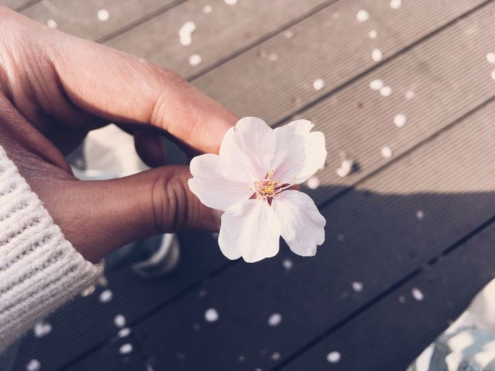 Close-up of a hand holding white flower