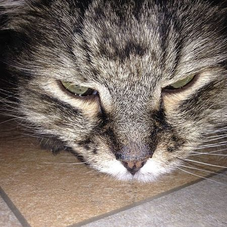 2014 кот Cat Instacats Cats Instakotik Katze Котик Katzen Cutecats котэ We_love_cats Caturday Katz Chat Mycat Kucing Catsofinstagram Instagramcats Catsagram Catoftheday Catlovers
