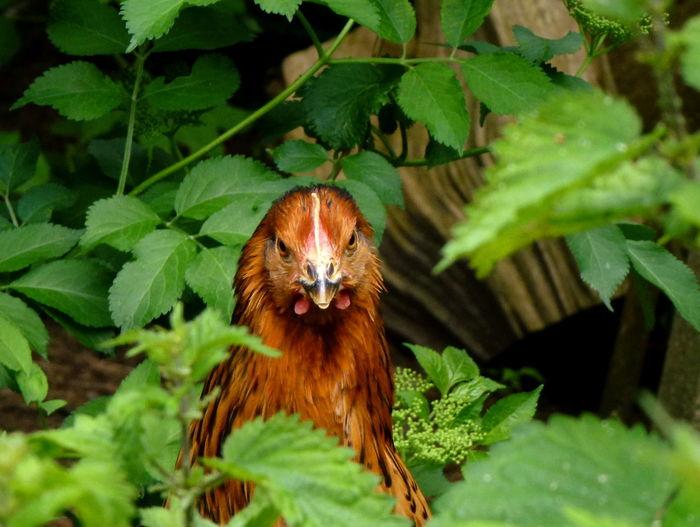 Close-up portrait of bird on plant