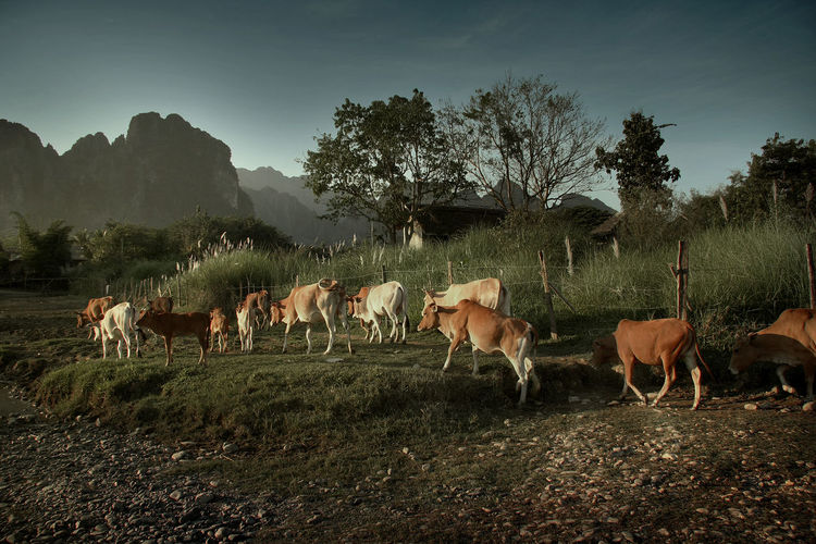 Agriculture Animal Animal Themes Cows Day Herd Landscape Large Group Of Animals Livestock Mammal Mountain Nature No People Outdoors Sky Tree