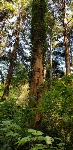 Outdoors Sunlight Nature Seqouia Trees Beauty In Nature Humboldt County Plants Travel Tree Water Forest Tree Trunk Grass Green Color Countryside Woods Green