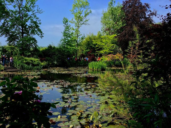 Monet Garden Incidental People Waterlilies Lake Pond Trees Plants Flowers Garden Tree Water Reflection Nature Growth Beauty In Nature Tranquility Green Color Outdoors Tranquil Scene Scenics Sky Day Plant Real People Vacations Women Large Group Of People