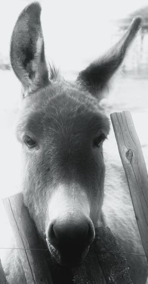 Old Friends Old Friend Grautier Donkey Esel Grau Lovely My Friend Just Me Handsome Reminding my old friend