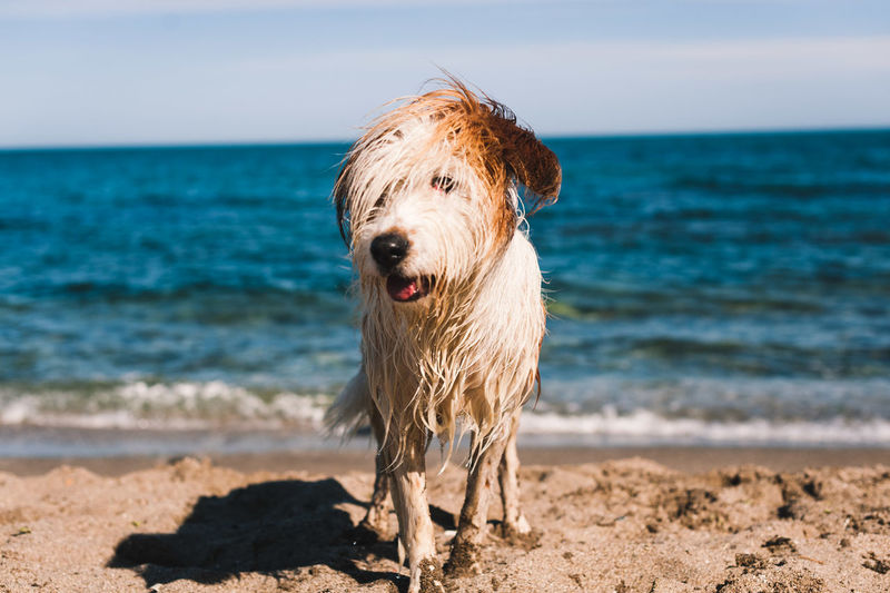 Close-up of dog on beach