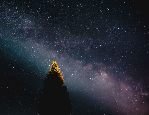 Milky Way above tree Star - Space Astronomy Space Night Sky Tree Plant Galaxy Scenics - Nature Star Space And Astronomy Tranquility Milky Way Science Infinity Tranquil Scene Star Field Beauty In Nature