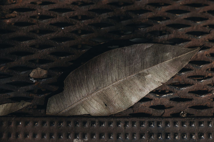 Leaf & Pattern Backgrounds Close-up Crisscross Day Design Feather  Focus On Foreground Full Frame High Angle View Indoors  Leaf Metal Nature No People Pattern Plant Part Still Life Textured  Wicker Wood - Material
