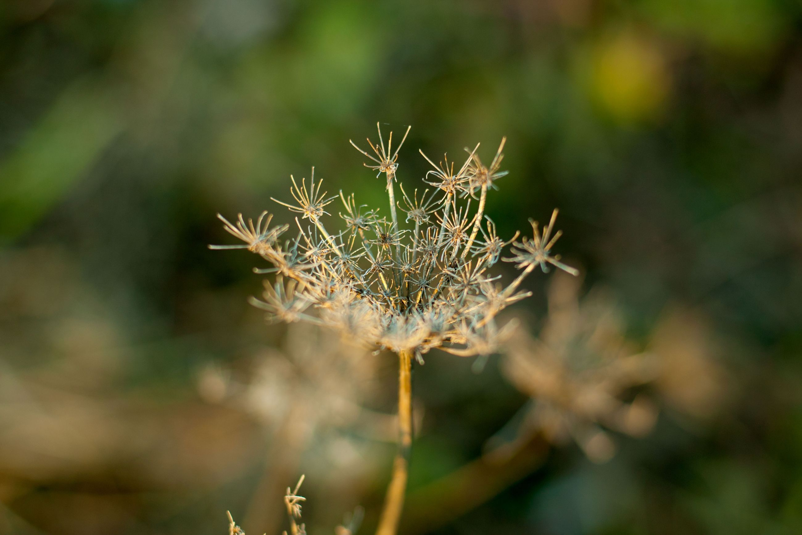 nature, plant, growth, fragility, close-up, focus on foreground, outdoors, no people, beauty in nature, day, flower