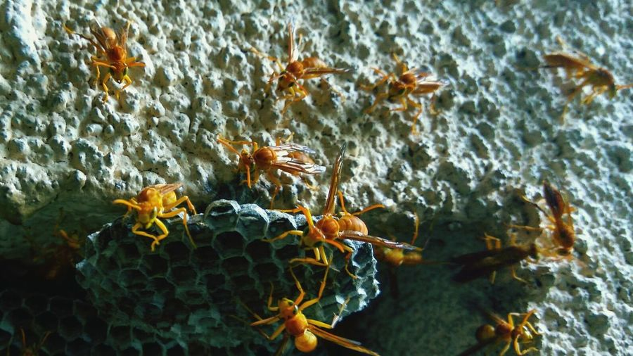 Close-Up Of Honey Bees On Honeycomb On Wall