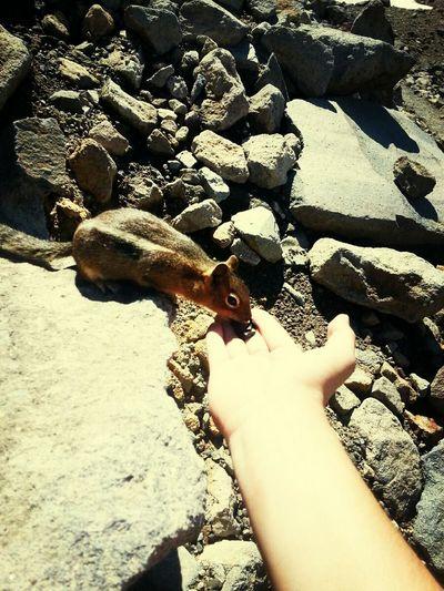 Feeding  Chipmunk Outdoors