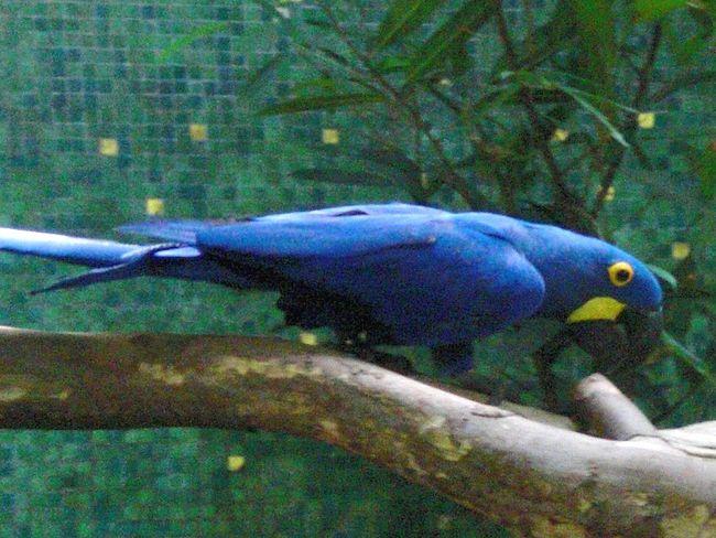 Parit Blue Yellow Nature First Eyeem Photo Netherlands Nature Photography Wildlife Birds Animals