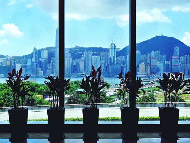 Flower Flowerpot HongKong Hong Kong Skyline Hong Kong Flowerpots Flowers In A Line Flowerpots In A Line Vase Silhouette Flower Arrangement Plant Arrangement Plant Pot Shadows Hong Kong Skyscraper Everything In Its Place Organised Aligned Neat Shadows & Lights Seeing Through Window Background Hong Kong Architecture Skyscrapers Interior Views