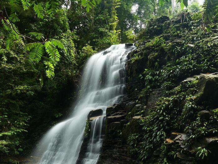 Waterfall on rocks in rainforest