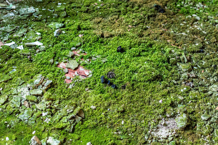 Day No People Abandoned Plant Green Color Animal Growth Animal Themes High Angle View Nature Animals In The Wild Animal Wildlife Moss Land One Animal Vertebrate Water Tree Lake Beauty In Nature Outdoors Green Plants