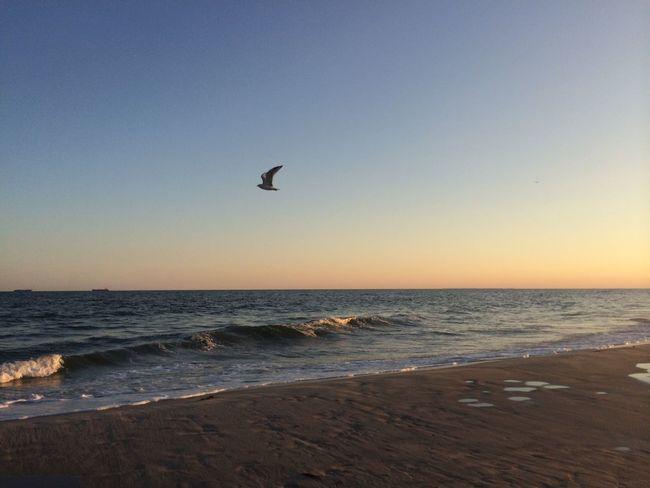 Sunset At Long Beach, NY Visualmagic Nikonphotographers #beachlovers #checkout My Gallery On Instagram#waycoolshots#awesomesunsetshots EyeEm Best Shots