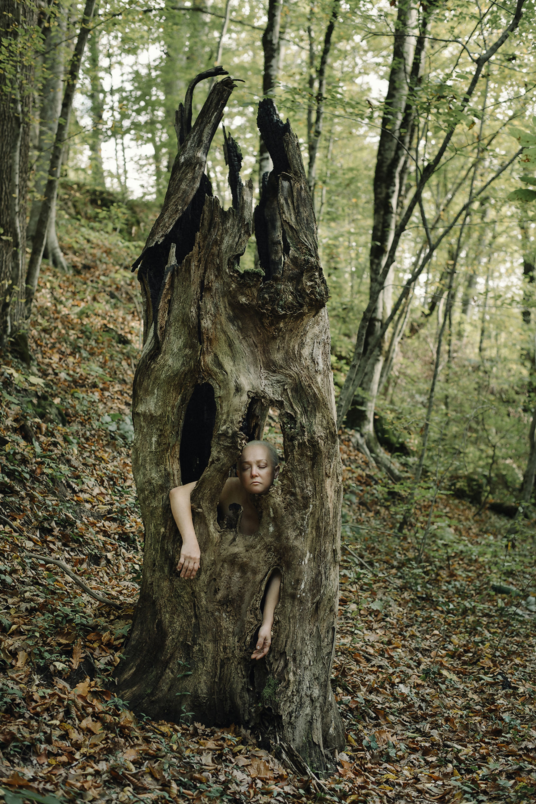 tree, forest, tree trunk, trunk, plant, land, day, nature, woodland, real people, leisure activity, one person, women, outdoors, lifestyles, human representation, full length, front view, bark