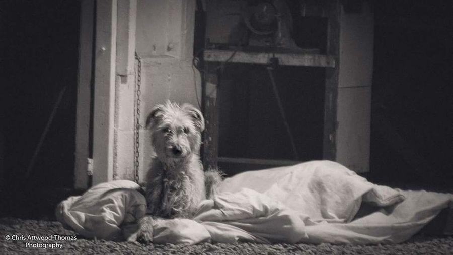 Lonely Dog Dog
