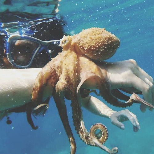 Close-up of person holding octopus in sea