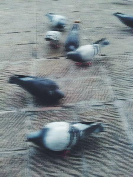Birds🐦 Day No People Animal Themes Bird Photography Birds Beautiful Nature