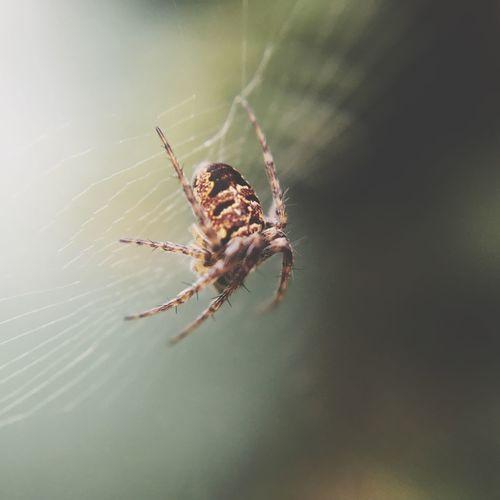 Spiders Web -