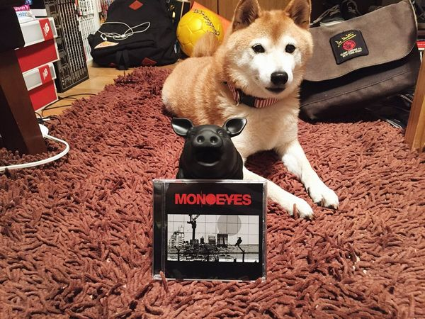 Dog Shiba Inu MONOEYES