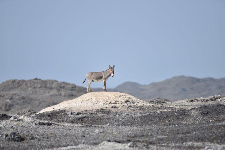 The king of the desert.