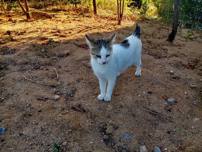 Cat Cats Cat♡ Cat Lovers Kedi Kedicik Kediler Kedi Aşkı Kediseverler Kedidelileri Kedicik 🐈