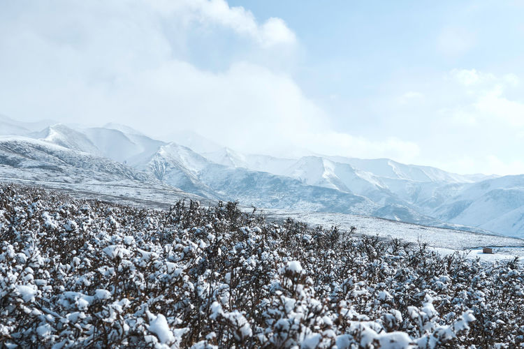 Snow covered plants on mountain against cloudy sky
