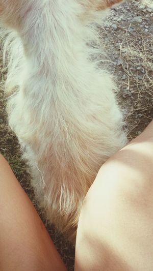 She never left me. ♥ Enjoying Life Pets Loveandlove Detailsofmylife