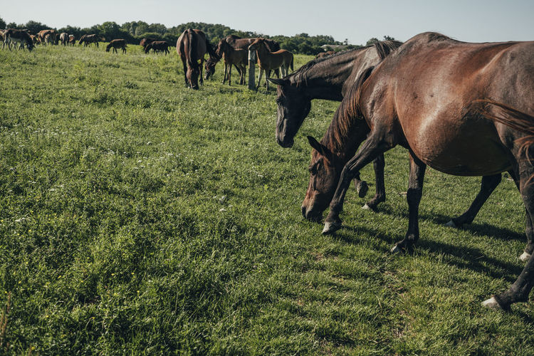 Animal Mammal Animal Themes Domestic Animals Field Grass Group Of Animals Land Livestock Domestic Plant Pets Animal Wildlife Vertebrate Horse Nature Green Color Landscape Environment No People Outdoors Herbivorous Wild Horses Horses