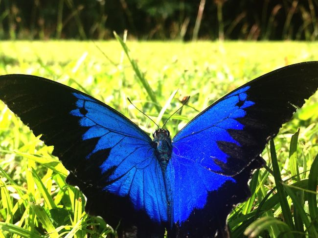 Butterfly outdoors