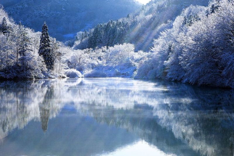 snow lake Nature Lake Tranquil Scene Beauty In Nature Tree Winter Reflection Cold Temperature Snow Water