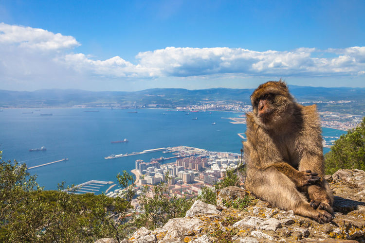 Cute monkey in gibraltar