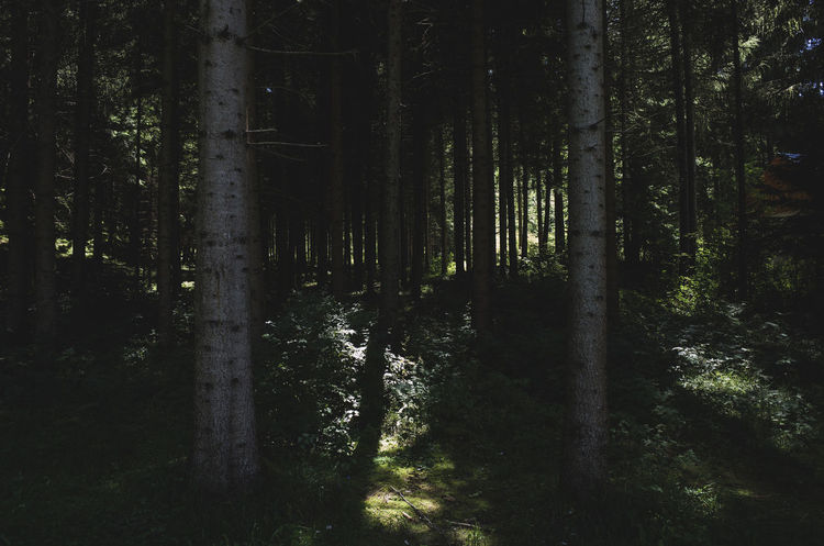 deep woods Beauty In Nature Darkness And Beauty Darkness And Light Deep Woods Forest Growth Home Is Where The Art Is Idyllic Light And Shadow Nature No People Remote Scenics Tranquil Scene Tree Tree Trunk Trees WoodLand