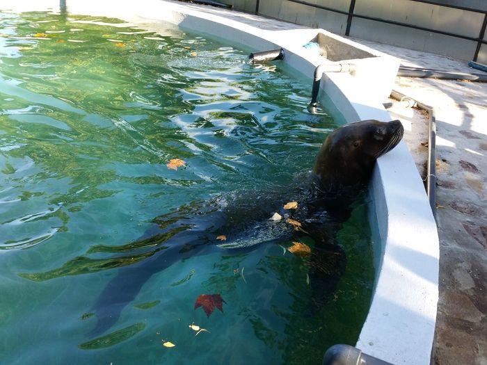 Water Outdoors Wonderful No People Nature Seal Sealifeaquarium Seal In Water