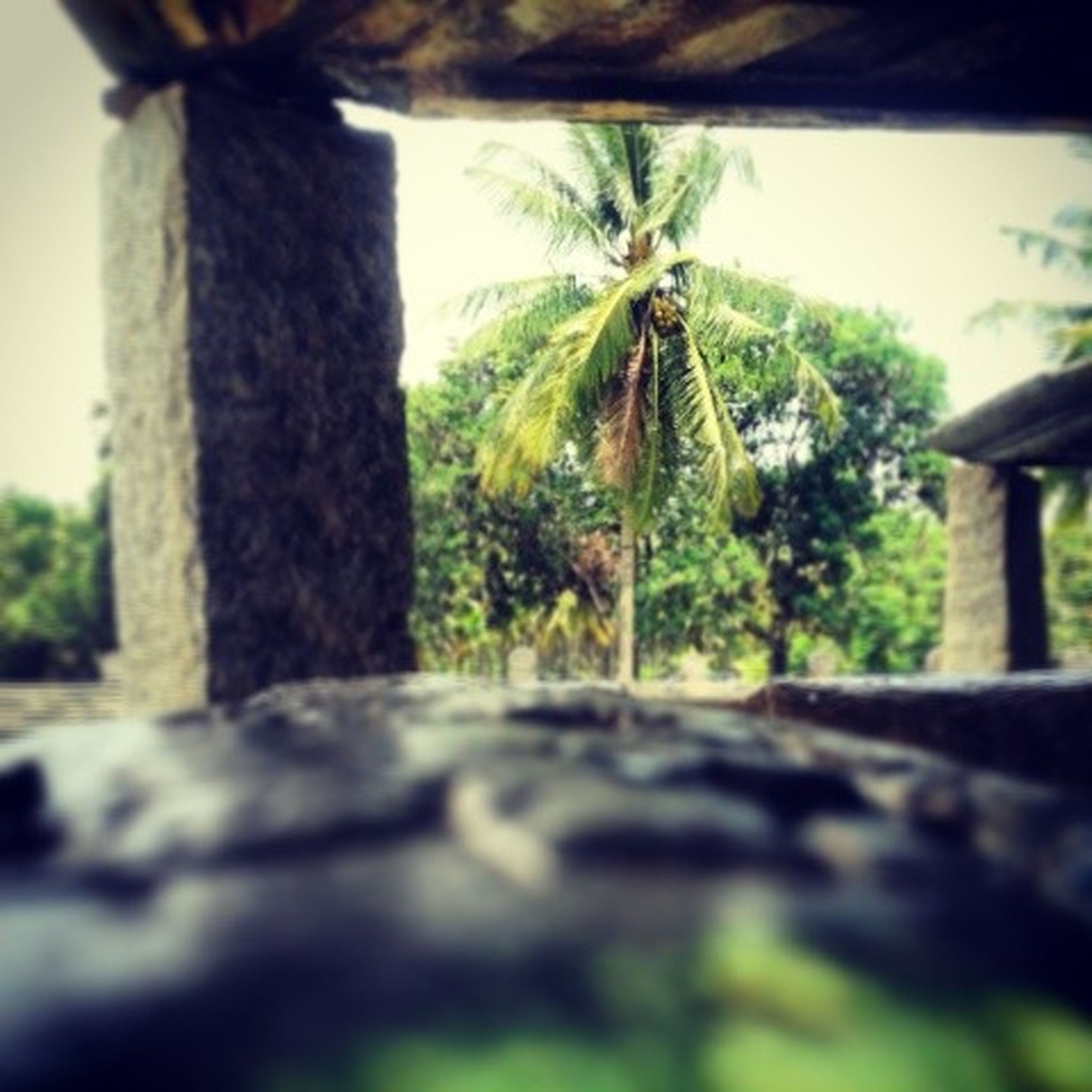 tree, growth, palm tree, green color, tree trunk, nature, selective focus, clear sky, tranquility, plant, day, focus on foreground, no people, sunlight, built structure, outdoors, sky, close-up, focus on background, growing