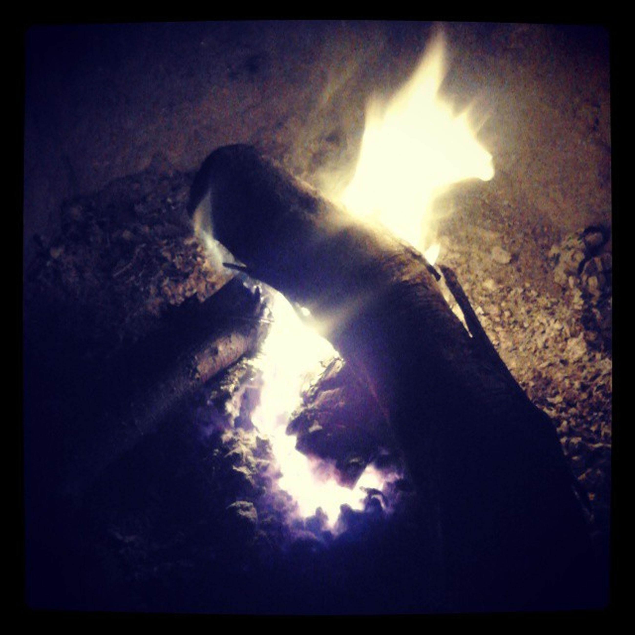 transfer print, auto post production filter, flame, burning, heat - temperature, high angle view, indoors, fire - natural phenomenon, close-up, no people, glowing, animal themes, sunlight, one animal, nature, fire, heat, night, pets