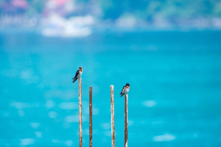 Two birds perched a top lengths of rebar with tropical blue sea background. Spring Alone Animals Bars Birds Blue Central Colorful depth of field Detail Feathers Island Location Metal Ocean Perched Rebar Resting Sea Season  Steel Tropical Watching Nature Day Animal Wildlife No People Sky Bird Outdoors Animal Vertebrate Motion Cloud - Sky Animals In The Wild Flying Animal Themes Focus On Foreground Water on the move Plane