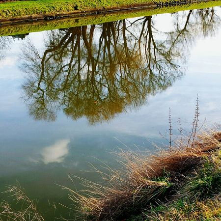 Nature Photography Nature Trees Tree Trees And Sky Reflection Reflections In The Water Reflection_collection Limburg Lanaken