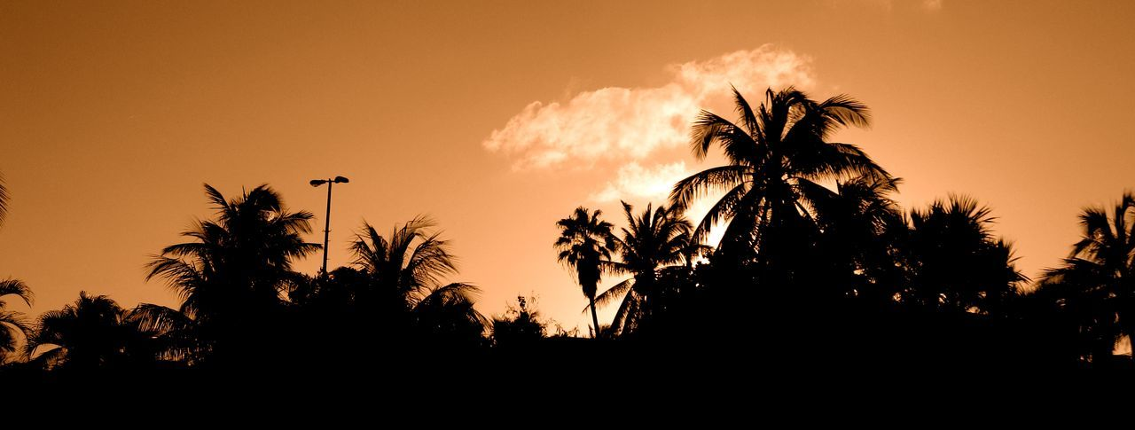 Balmy Cuban sunset over the palm trees 😍🌅🌴 Sunset Silhouette Tree Palm Tree No People Outdoors Nature Day Tropical Sunset Tropical Tropical Paradise Tropical Climate Palm Trees Palm Tree Palm Palm Tree Silhouette Cuba Varadero Sunset Silhouettes Sunset_collection Orange Sky Copy Space EyeEmNewHere Beauty In Nature Scenics
