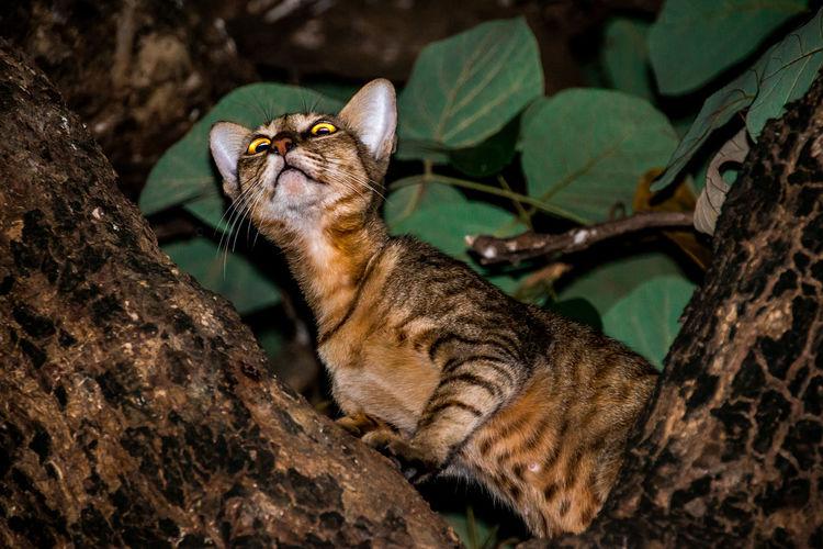 Cat clambering on tree