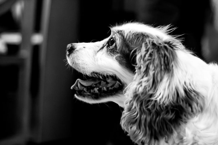 Beutiful  Beuty Of Nature Blackandwhite Dog Dogs Life Dog Light And Shadow Old Dog