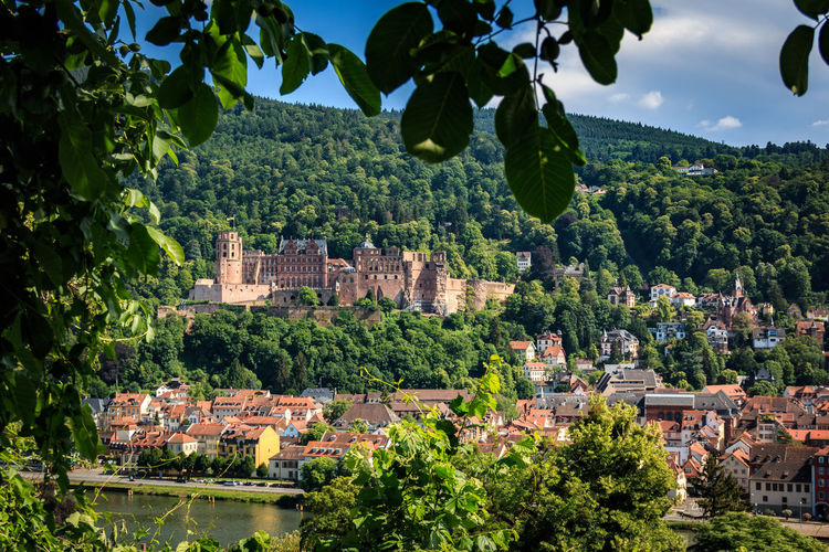 Ascent to the Philosopher's Path with a view of the Heidelberg Castle, Heidelberg, Baden-Wurttemberg, Germany Heidelberg Schloss Architecture Building Building Exterior Built Structure City Cityscape Day Environment Green Color Growth Heidelberger Schloss House Landscape Mountain Nature No People Outdoors Plant Residential District Schlossruine Town TOWNSCAPE Tree