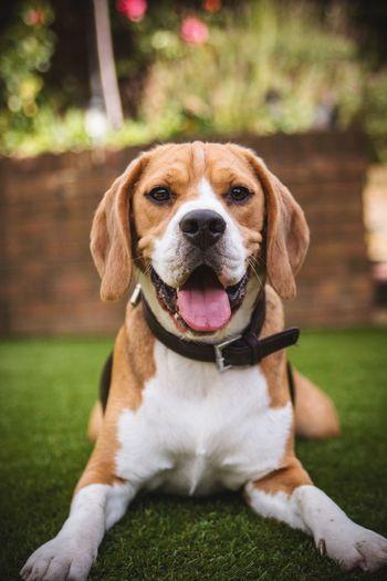 Close-up of dog looking at camera